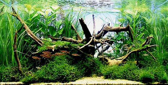kak-stilno-oformit-akvarium