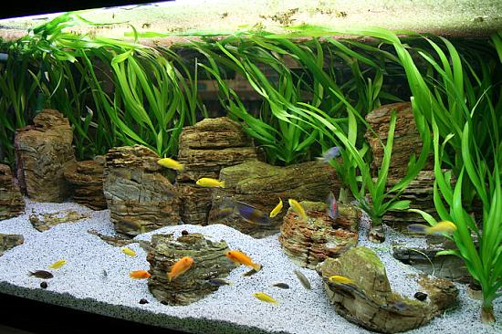oformlenie-akvariuma-kamni