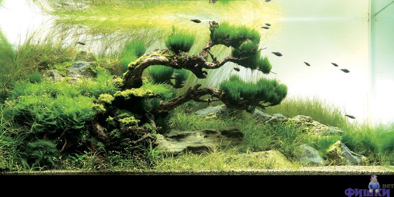 oformlenie-akvariuma-korjagi