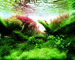 natur aqvarium 10